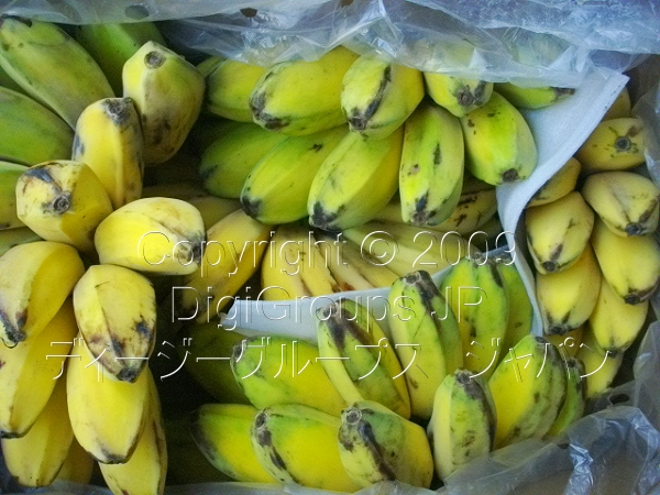 Saging na Saba (Green Banana) MEDIUM Size